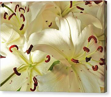 Madonna Lilies Canvas Print by Nigel Radcliffe