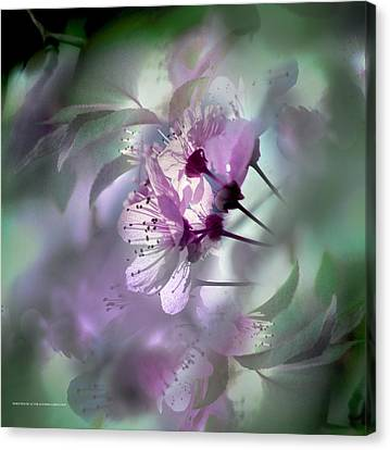 Canvas Print featuring the photograph Madrid Flowers by Alfonso Garcia