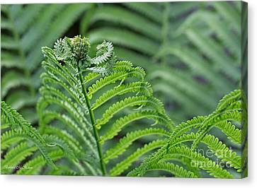 Maestro Conducting The Fern Section Canvas Print