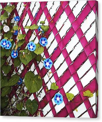 Canvas Print featuring the photograph Magenta Chain-link by Shawna Rowe