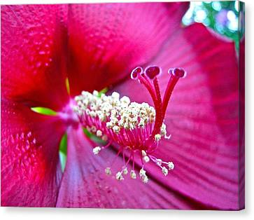 Canvas Print featuring the photograph Magenta Flower by Lori Miller