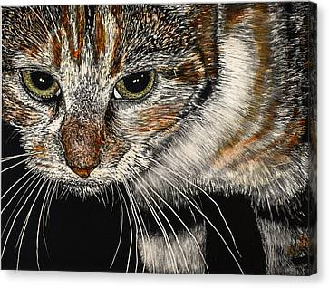 Maggie The Cat Canvas Print by Robert Goudreau