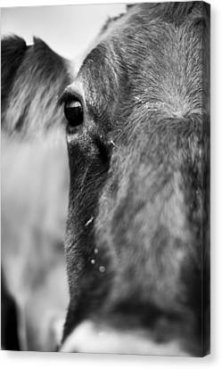 Maggie The Cow Abstract Canvas Print by Dustin K Ryan