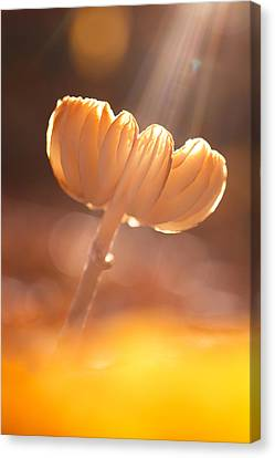 Magic From Above Canvas Print by Roeselien Raimond