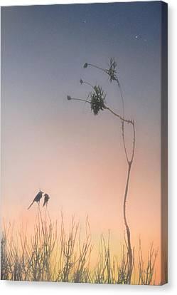 Magic Hour  Canvas Print