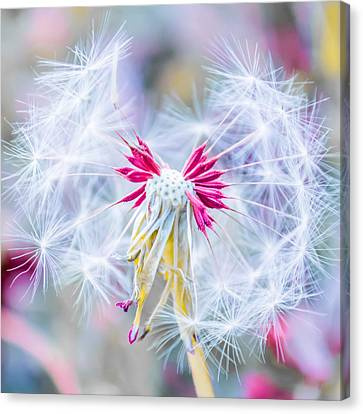 Magic In Pink Square Canvas Print
