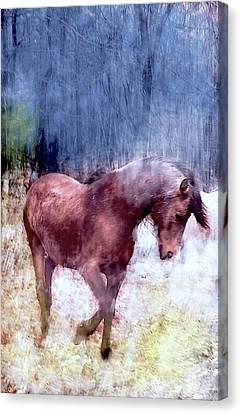 Canvas Print - Magic On The Farm by Patricia Keller
