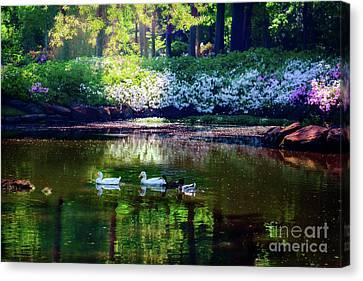Magical Beauty At The Azalea Pond Canvas Print