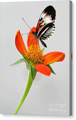Magical Butterfly Canvas Print by Sabrina L Ryan