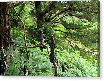 Canvas Print featuring the photograph Magical Forest by Aidan Moran