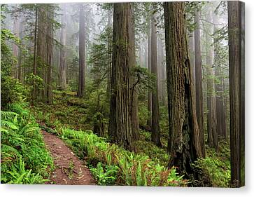 Magical Forest Canvas Print