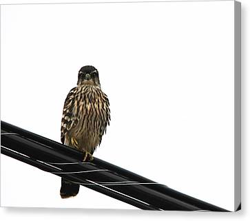 Magical Merlin Canvas Print by Debbie Oppermann