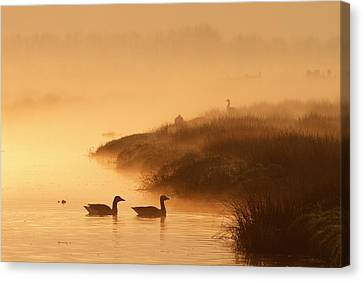 Magical Misty  Morning Canvas Print