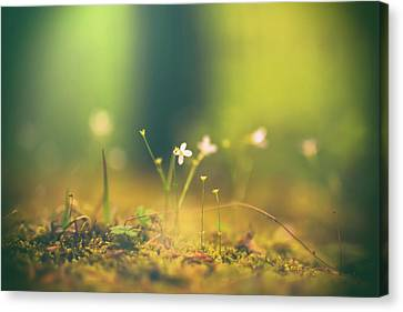 Canvas Print featuring the photograph Magical Moment by Shane Holsclaw