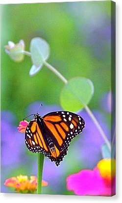 Canvas Print featuring the photograph Magical Monarch by Byron Varvarigos