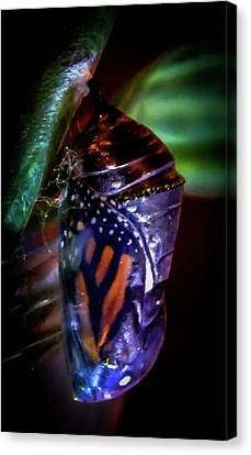 Magical Monarch Canvas Print by Karen Wiles