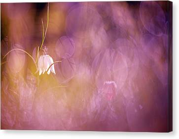 Magical Mood Canvas Print by Roeselien Raimond