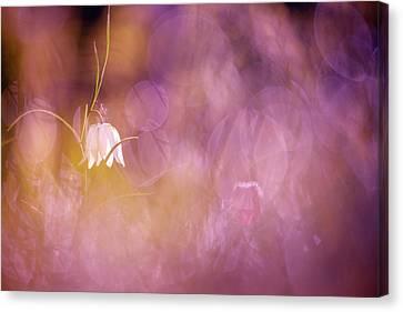 Magical Mood Canvas Print by Roeselien Raimond