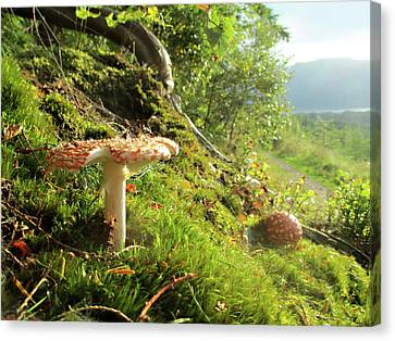 Magical Mushrooms 1 Canvas Print by The Rambler