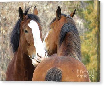 Magnificant Horses -the Clydesdales-10 Canvas Print by Diane M Dittus