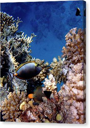 Magnificent Red Sea World Canvas Print by Johanna Hurmerinta