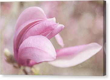 Magnolia Bloom Springtime Canvas Print by Julie Palencia