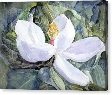 Magnolia Blossom Canvas Print by Barry Jones