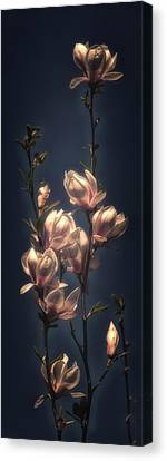 Magnolia Blossom Canvas Print by Hans Zimmer