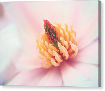 Canvas Print featuring the photograph Magnolia Crown by Kharisma Sommers