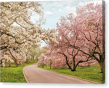 Magnolia Grove Canvas Print by Jessica Jenney