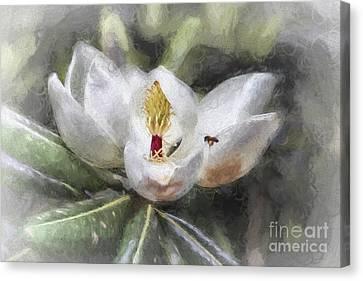 Magnolia Harvest Canvas Print