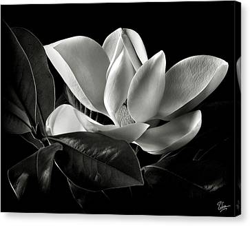 Magnolia In Black And White Canvas Print by Endre Balogh