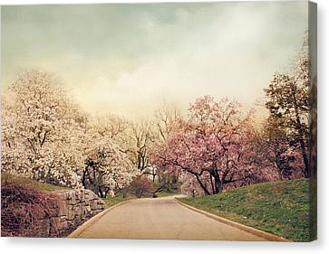 Magnolia Lane Canvas Print by Jessica Jenney