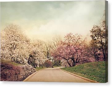 Magnolia Lane Canvas Print