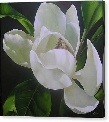 Magnolia Light Canvas Print