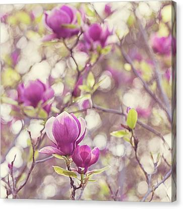 Canvas Print featuring the photograph Magnolia by Melanie Alexandra Price