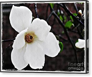 Magnolia Memories 1 Canvas Print by Sarah Loft