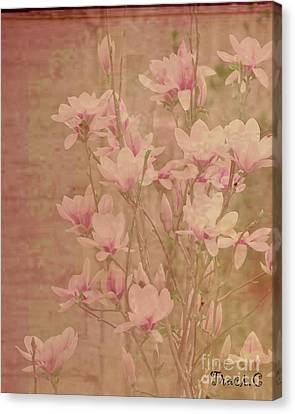 Canvas Print featuring the photograph Magnolia Nostalgia by Traci Cottingham