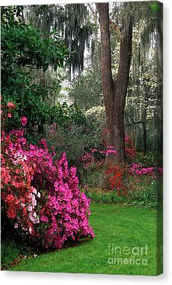 Canvas Print featuring the photograph Magnolia Plantation - Fs000148a by Daniel Dempster