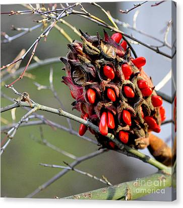 Canvas Print featuring the photograph Magnolia Seedhead by Tanya Searcy