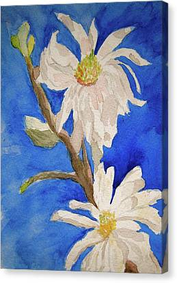 Magnolia Stellata Blue Skies Canvas Print by Beverley Harper Tinsley