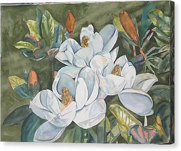 Magnolias Five Canvas Print