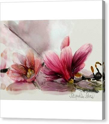 Magnolien .... Canvas Print by Jacqueline Schreiber