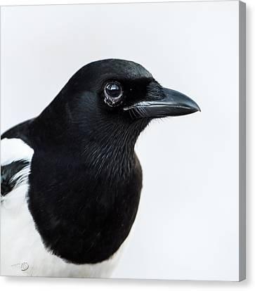 Magpie Portrait Canvas Print by Torbjorn Swenelius