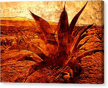 Maguey Agave Canvas Print