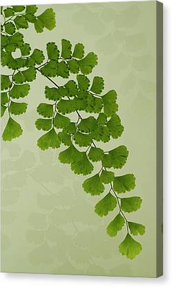 Country Magazine Decor Canvas Print - Maiden Hair Fern With Shadows by Sandra Foster