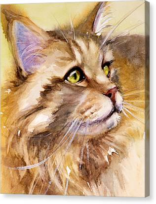 Main Coon Canvas Print by Judith Levins
