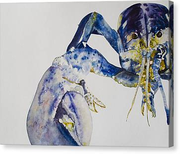 Maine Blue Lobster Canvas Print by Kellie Chasse