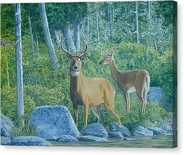 Maine Deer Canvas Print by Lee Thomason