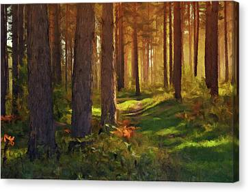 Canvas Print featuring the photograph Maine Forest Sunset by David Dehner